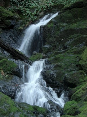 A wonderful hike in Marin County: Cataract Falls
